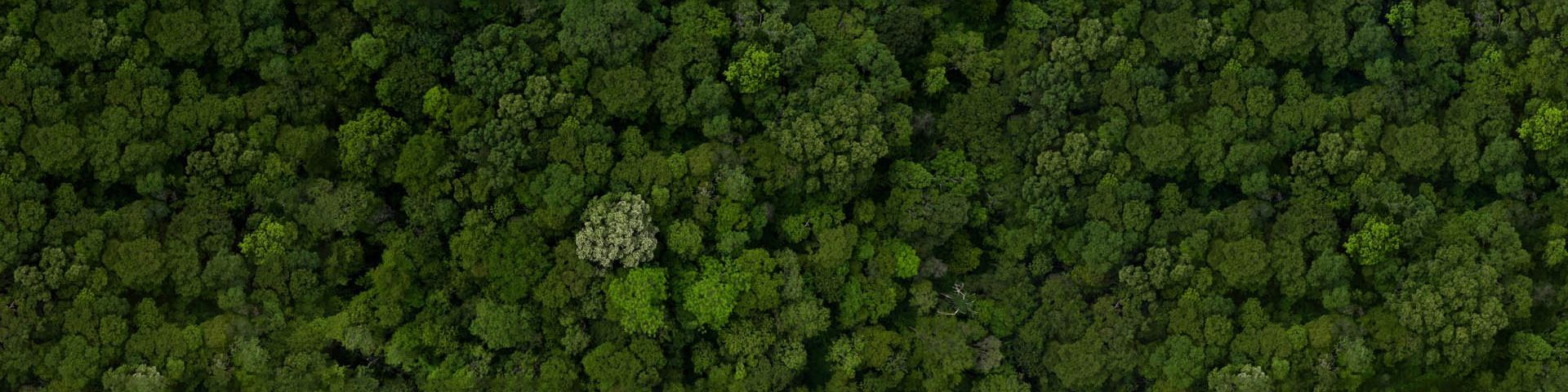 An arial view of a densely wooded forest.